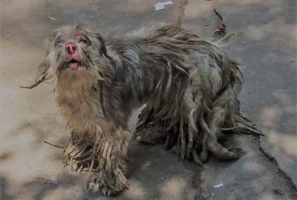 Animal Rescue Cambodia Animal Welfare in Cambodia